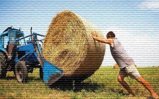 Земля для крестьянского фермерского хозяйства — как получить в аренду