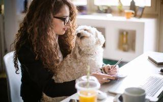 Фриланс или работа в офисе — особенности и что лучше выбрать