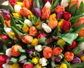 Заработок на домашних цветах: как организовать и где найти клиентов