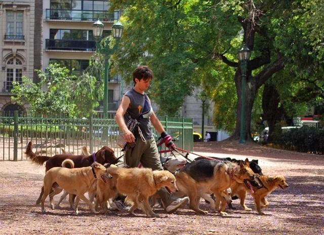 Пробовал продавать товары на Авито и выгуливать собак, но ничего не получилось