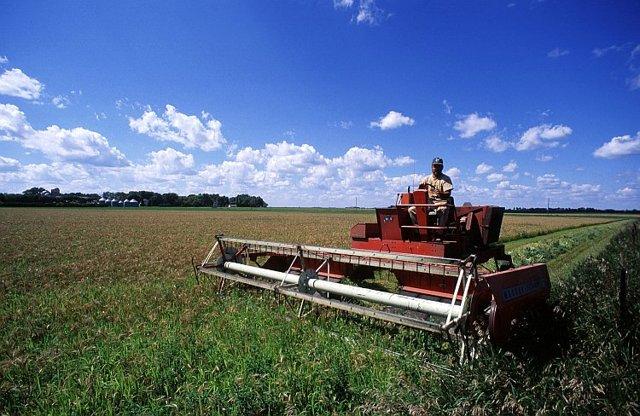 Гранты на развитие сельского (фермерского) хозяйства в 2019 году