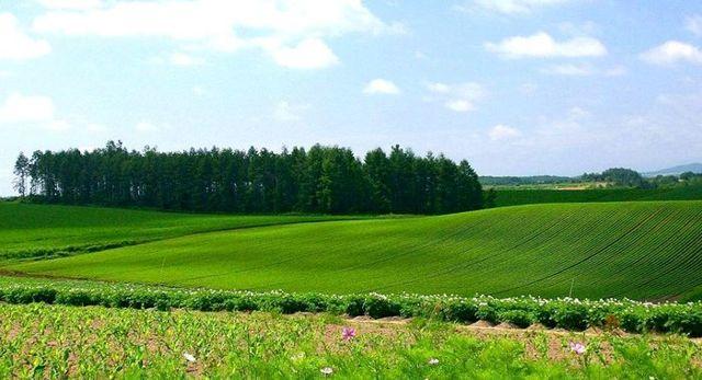 Оценка стоимости земельного участка - методы, пример + документы