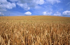 Имущество крестьянского фермерского хозяйства (КФХ)