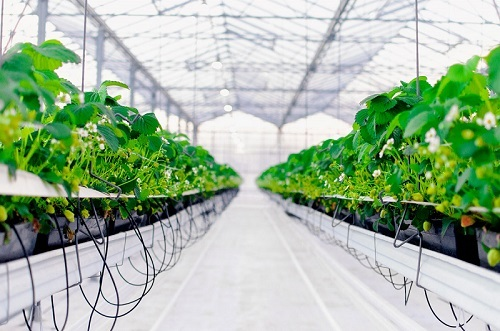 Инвестиции в сельское хозяйство: как начать, варианты вложений