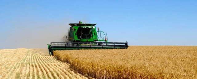 ЕСХН - единый сельскохозяйственный налог 2019: отчетность, как перейти