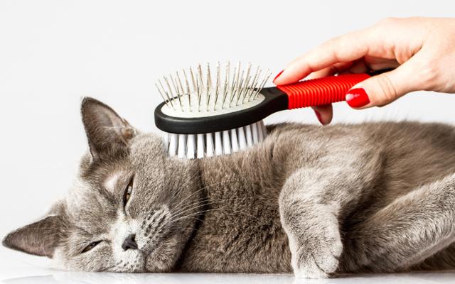 Заработок на домашних животных: 4 рабочих способа, размер дохода