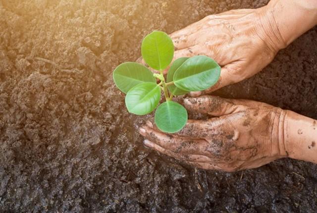 Как зарабатывать на земле: фермерство и инвестиции в участки